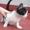 Даром! Красивый котенок! #973823
