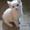 котята 2 х месячные #982646