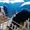 Продаются телята бычки мясной породы от 1-3 месяцев с доставкой в регионы #1512981