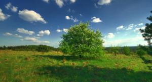 Участок земли ижс с собственным родником  в Острогожске  - Изображение #1, Объявление #1625728