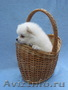 Шпиц щенки белого и бело-рыжего окраса