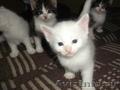 Преобретите славного котёнка