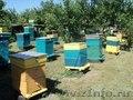 Продам  ДЕШЕВО пчелосемьи на высадку