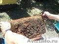 Продам оптом мёд разнотравье+подсолнух,  подсолнух с личной пасеки