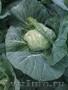 Воронежская картошка