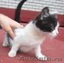 Даром! Красивый котенок!