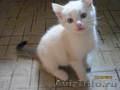 котята 2 х месячные