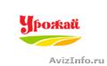 Семена подсолнечника - сорта: Енисей,  Бузулук,  Бригантина