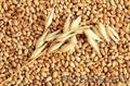 Закупаем Пшеницу Фураж