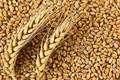 Пшеница 3-4 класса Воронежская область